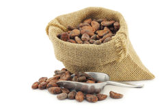 Cocoa beans in a burlap bag with an aluminum spoon Stock Images