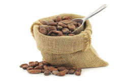 Cocoa beans in a burlap bag with an aluminum spoon Royalty Free Stock Image