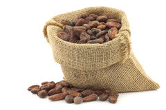Cocoa beans in a burlap bag Royalty Free Stock Photo