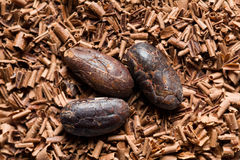 Cocoa beans with chocolate shavings Stock Image