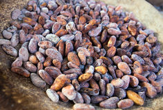 Cocoa beans Royalty Free Stock Image