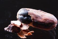 Cocoa beans closeup Stock Image