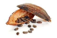 Cocoa beans into cocoa fruit Royalty Free Stock Photo