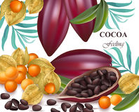 Cocoa beans and gooseberry realistic detailed Vector exotic Royalty Free Stock Image