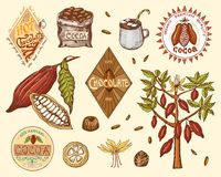 Cocoa beans and hot chocolate logos. modern vintage badges for the shop menu. Seeds of fruit on the plantation. Calligraphy style for frames, labels. farm Stock Images