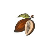 Cocoa beans  icon. Stock Photo
