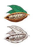 Cocoa Beans. Illustration of cocoa beans with green leaves Stock Photography