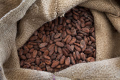 Cocoa beans in a jute bag. Jute bag full with cocoa beans royalty free stock image