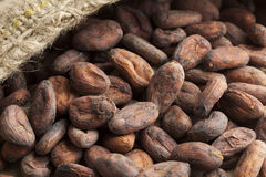 Cocoa beans in a jute bag Stock Images