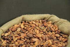 Cocoa Beans in a Jute Bag Stock Photos