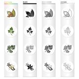 Cocoa beans, a leaf of a herb of a dill, a parsley, spice vanilla. Herbs and spices set collection icons in cartoon. Black monochrome outline style vector Royalty Free Stock Photo