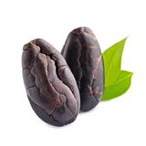 Cocoa beans with leaves Stock Photography