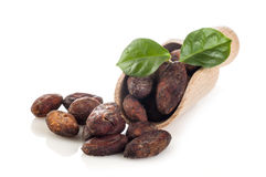Cocoa beans with leaves on scoop Stock Photo