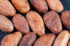 Cocoa Beans Stock Image