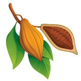 Cocoa beans Royalty Free Stock Photography