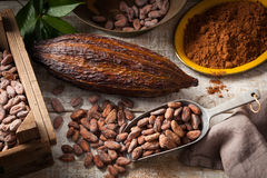 Cocoa beans and pod royalty free stock photography
