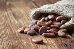 Cocoa beans in sackcloth bag stock images