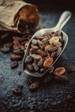 Cocoa beans in a  scoop Stock Photo