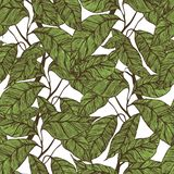 Cocoa beans seamless pattern. vector illustration