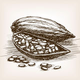 Cocoa beans sketch style vector illustration Stock Images