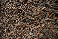 Cocoa beans in a warehouse. In Amsterdam, the biggest harbour for importing cocoa in the world royalty free stock photos