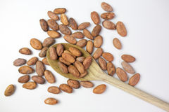 Cocoa beans. On white background Stock Photography