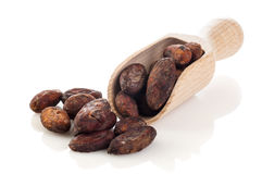 Cocoa beans on the wooden scoop Stock Photo