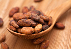 Cocoa beans in wooden spoon Royalty Free Stock Images