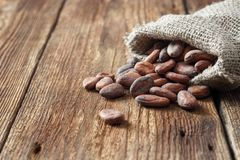 Cocoa cacao beans in sackcloth bag stock photo