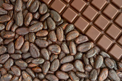 Cocoa and chocolate Stock Image