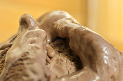 Cocoa and chocolate ice cream. Detailed surface Royalty Free Stock Photo
