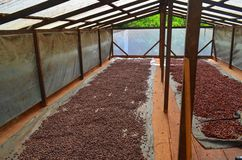 Cocoa farm,. Solar system for dry the cocoa beans Royalty Free Stock Photo