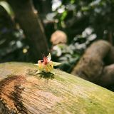 Cocoa flower on a wood piece royalty free stock photo