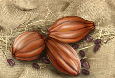 Cocoa fruit on a background of old tissue Royalty Free Stock Photography
