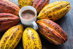 Cocoa Fruit and Cocoa Beans With a cup of hot cocoa royalty free stock photography