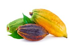 Cocoa fruit isolated on white background stock photo