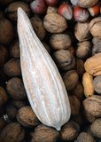 Cocoa Fruit and Nuts Royalty Free Stock Images