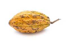 Cocoa fruit, raw cacao beans, Cocoa pod isolated on white background. Cocoa fruit, raw cacao beans, Cocoa pod isolated on white background royalty free stock photography