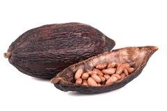 Cocoa fruit stock photo