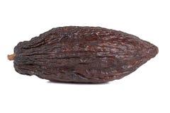 Cocoa fruit Stock Image