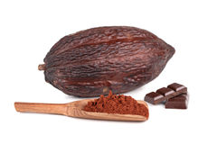 Cocoa fruit Stock Image