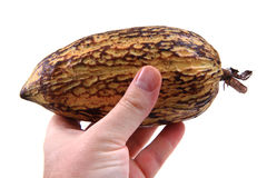 cocoa fruit  Royalty Free Stock Images