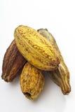 Cocoa fruits Royalty Free Stock Photos