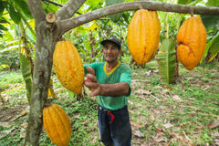Cocoa growers in rainforest in Peru Stock Photos