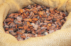 Cocoa ia a bag Stock Photo
