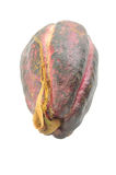 Cocoa pod Royalty Free Stock Photos