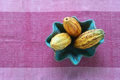 The cocoa pod in a blue bowl on the table with a pink cloth. Raw delicious tree nature organic ingredient tropical chocolate object aroma fresh wooden plant stock image