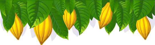 Cocoa pod and leaf - the upper bar- vector Stock Photos