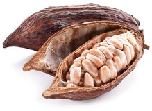 Cocoa pod Royalty Free Stock Images