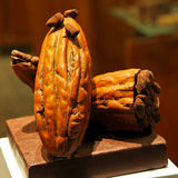 Cocoa pod raw Royalty Free Stock Photo